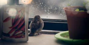 Собствена история за врабчето