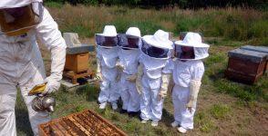 Сега е момента да преминеш Курс по пчеларство – НПП 2017/2019